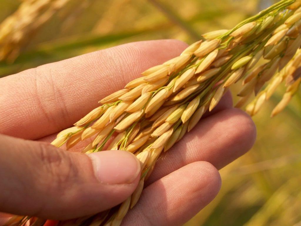 Hand Weizen