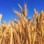 Der große Getreidemühlen Test 2019 1
